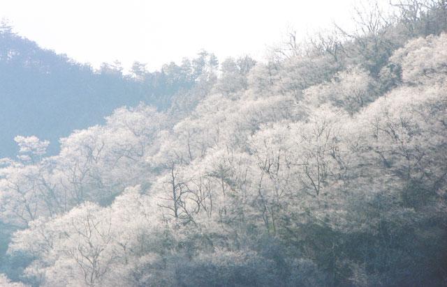 muhyo64.jpg