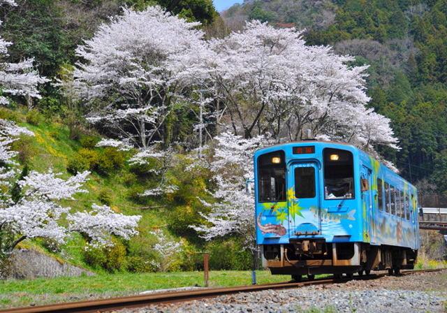 yamasiro1041.JPG